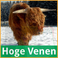Winter Hoge Venen via http://www.feestdagen-belgie.be/